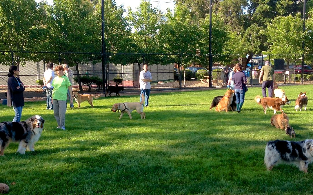 Waco Dog Park Now Open: Learn all the details