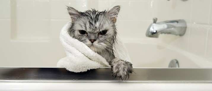 How to Bathe your Cat and Survive Scratch-Free