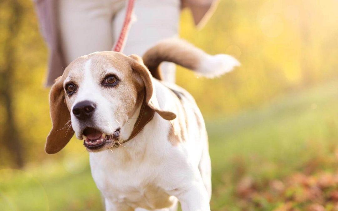 5 Secrets Your Dog Walker Doesn't Want You to Know