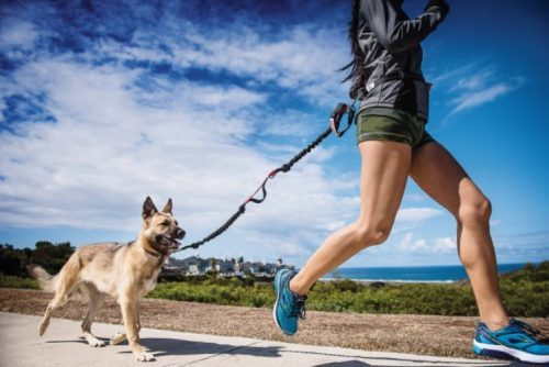Get Outdoors: 7 Fun Activities To Do With Your Pup